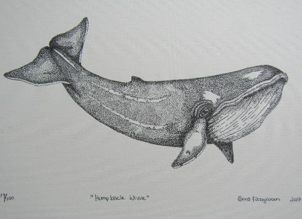 humpback whale print